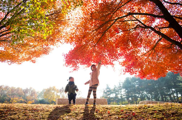 눈부신 가을빛1