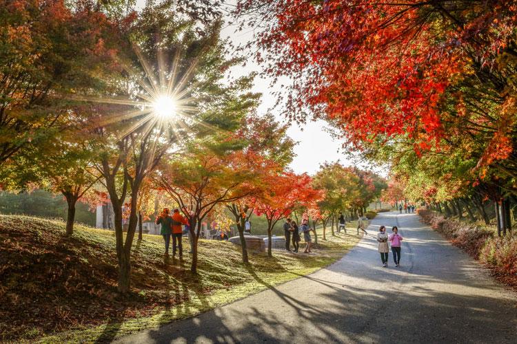 깊어가는 가을, 단풍길 따라...