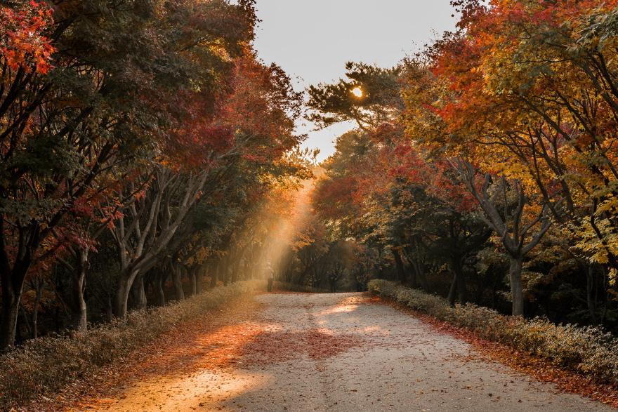 가을 아침의 빛내림