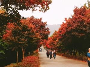 가을날의 조각들
