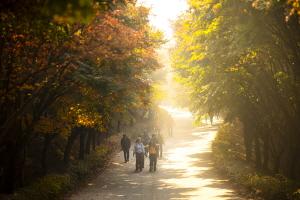 가을빛속으로