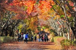 낙엽 흩날리는 단풍길
