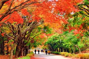 아름다운 단풍나무 터널..