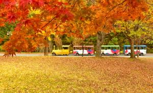 가을로 가는 열차