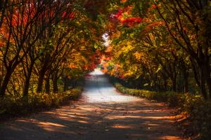가을빛 터널