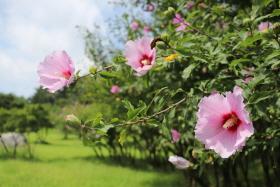 여름날 찾아오는 빛의 나라의 꽃