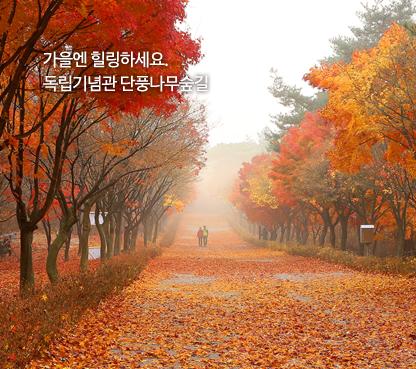 역사를 만나, 미래를 열다. 대한민국 독립기념관 가을엔 힐링하세요. 독립기념관 단풍나무숲길