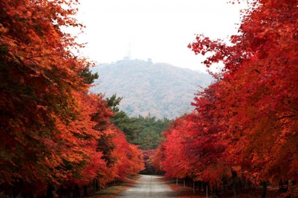 단풍나무 숲길 사진